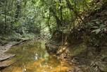 Forêt amazonienne