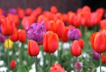 Flore d'Istanbul